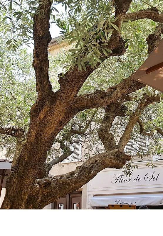 Le Restaurant - Fleur de Sel - Grimaud